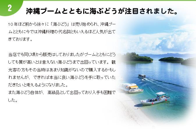沖縄ブームとともに海ぶどうが注目されました